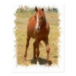 Chestnut Yearling Horse Postcard