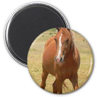 Chestnut Yearling Horse Round Pin Fridge Magnet