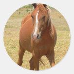 Chestnut Yearling Horse Sticker