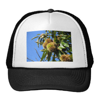 Chestnuts Hanging On The Tree Trucker Hat