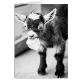 Chewing Goat Card