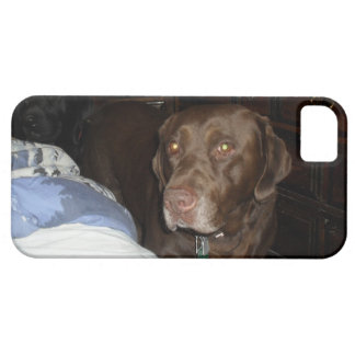 Chewy Chocolate Chip our chocolate lab iPhone SE/5/5s Case