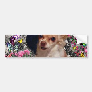 Chi Chi in Butterflies  - Chihuahua Puppy in Hat Car Bumper Sticker