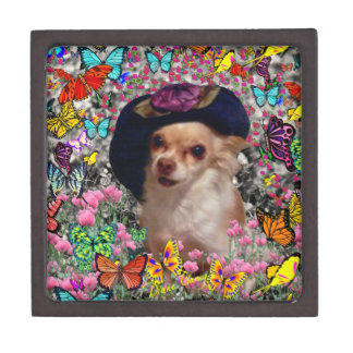 Chi Chi in Butterflies  - Chihuahua Puppy in Hat Gift Box