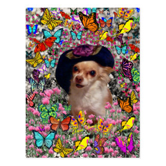 Chi Chi in Butterflies  - Chihuahua Puppy in Hat Postcard