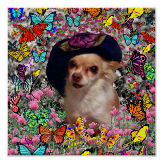 Chi Chi in Butterflies  - Chihuahua Puppy in Hat Poster