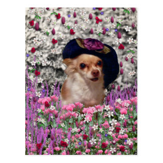 Chi Chi in Flowers Postcard - Chihuahua