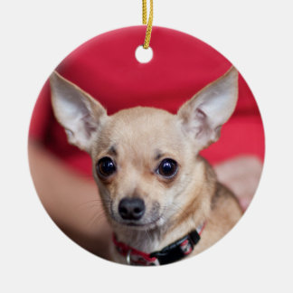Chi Chi Sweet Pea Brown Chihuahua Ornament