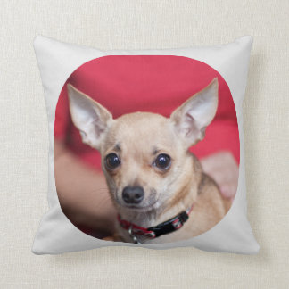 Chi Chi Sweet Pea Brown Chihuahua Pillow