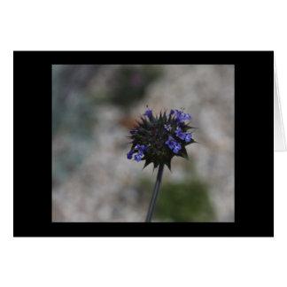 Chia Desert Wildflower Borrego Springs California Card