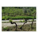 Chianti Vineyard in Tuscany Wine Region Italy Cards