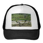 Chianti Vineyard in Tuscany Wine Region Italy Mesh Hat