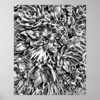 Chic Modern Black & White Succulent photo pattern Poster
