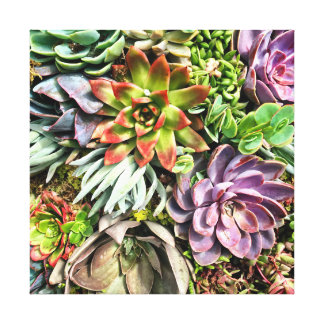 Chic Modern Colorful Succulent photo pattern Canvas Print