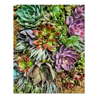 Chic Modern Colorful Succulent photo pattern Poster