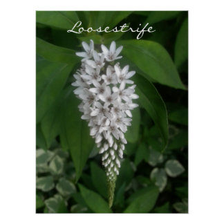 """CHIC POSTER_""""Loosestrife"""" WHITE/GREEN Poster"""