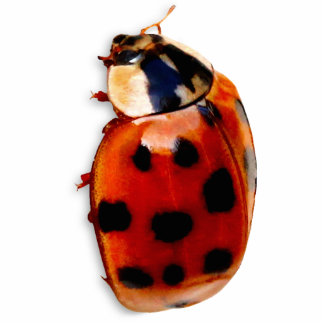 Chic Spotted Ladybug Photo Cutout