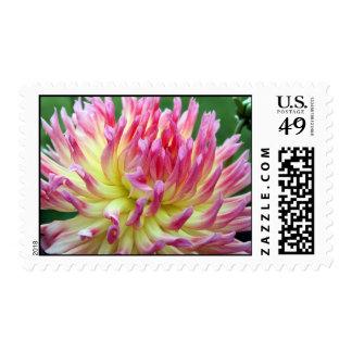 Chic Stamp