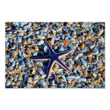 Art Themed Chic Starfish And Seashells Poster