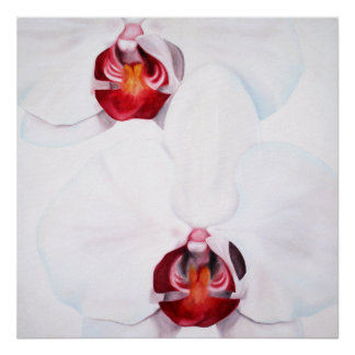 Chic white red orchids large 24x24 poster print