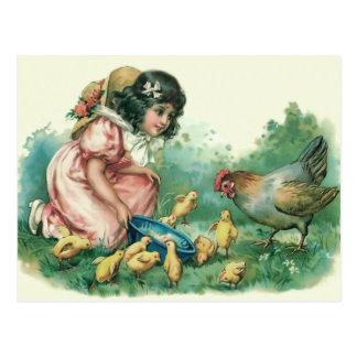 Chica que alimenta la gallina del polluelo de postales