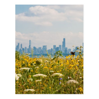 Chicago as seen from Montrose Harbor's bird Postcard