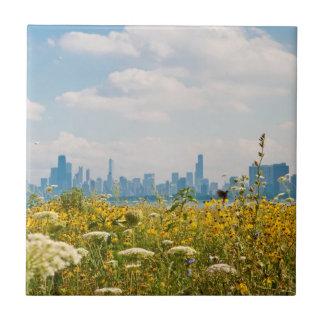 Chicago as seen from Montrose Harbor's bird Tile