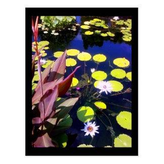 chicago botanic garden post card