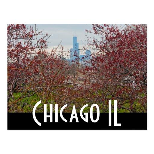 Chicago - la haba postal