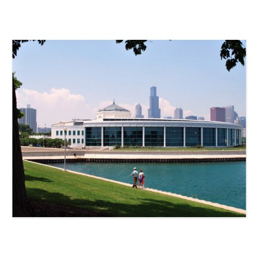 Chicago Shedd Aquarium collection Post Card