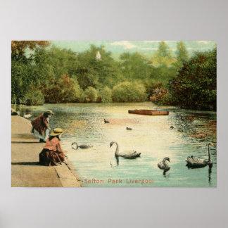 Chicas que alimentan los cisnes, vintage 1904 de póster