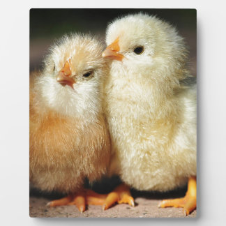 Chick Brotherhood Plaque