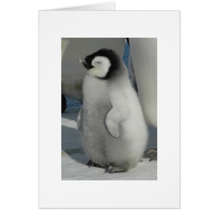 Chick Chat - penguin style Card