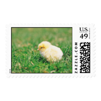 Chick in Grass Stamp