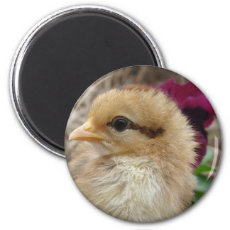Chick in Pansy Garden Magnet