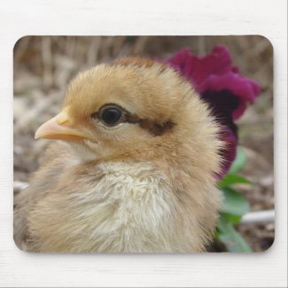 Chick in Pansy Garden mousepad