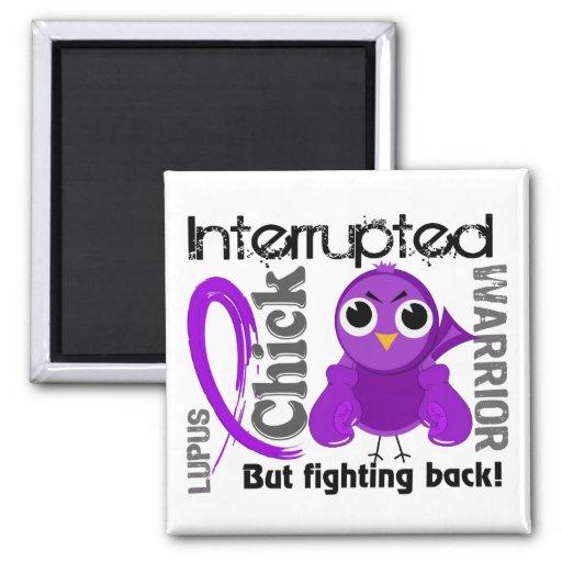 Chick Interrupted 3 Lupus SLE Refrigerator Magnet