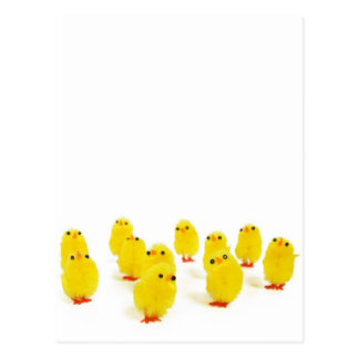 Chick magnet chillin with my peeps funny photo postcard