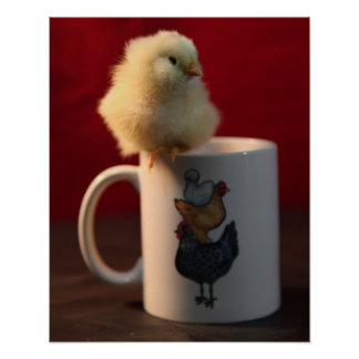 Chick on a Coffee Cup Print