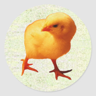 Chick on the Move (2) Classic Round Sticker