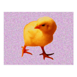Chick on the Move Postcard