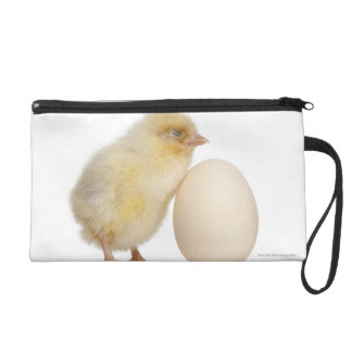 Chick with egg (2 days old) wristlet purse