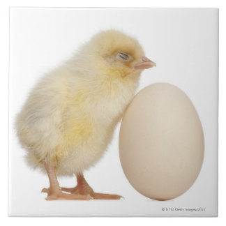 Chick with egg (2 days old) ceramic tiles