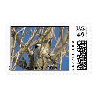 Chickadee #01, Zazzle.com/Jack9Frost Postage Stamp