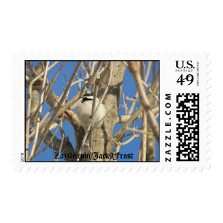 Chickadee #02, Zazzle.com/Jack9Frost Postage