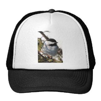 Chickadee 9693 gorros
