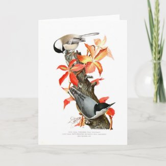 Chickadee and Nuthatch Card