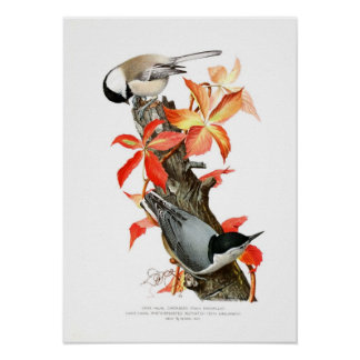 Chickadee and Nuthatch Poster