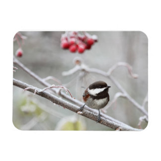 Chickadee and Red Berries in Winter Magnet
