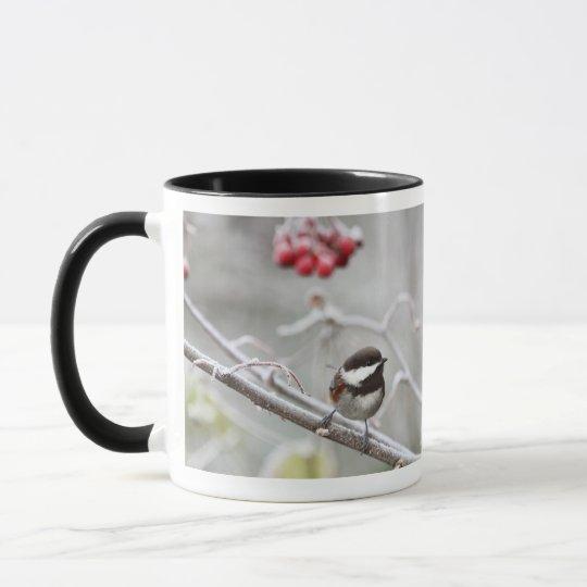 Chickadee and Red Berries in Winter Mug